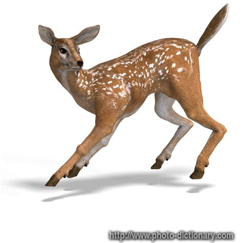 young doe - photo/picture definition at Photo Dictionary