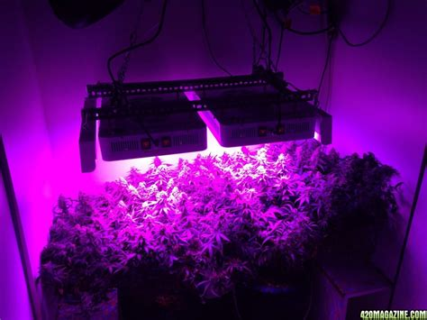 Best LED Grow Light for under $1000? - Page 8